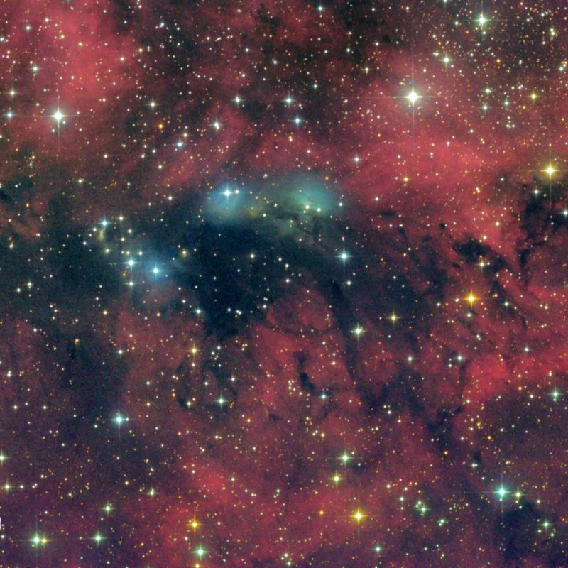 vdB131132 und NGC6914 im Schwanbearbeitet scaled 800x800 - Reflexionsnebel