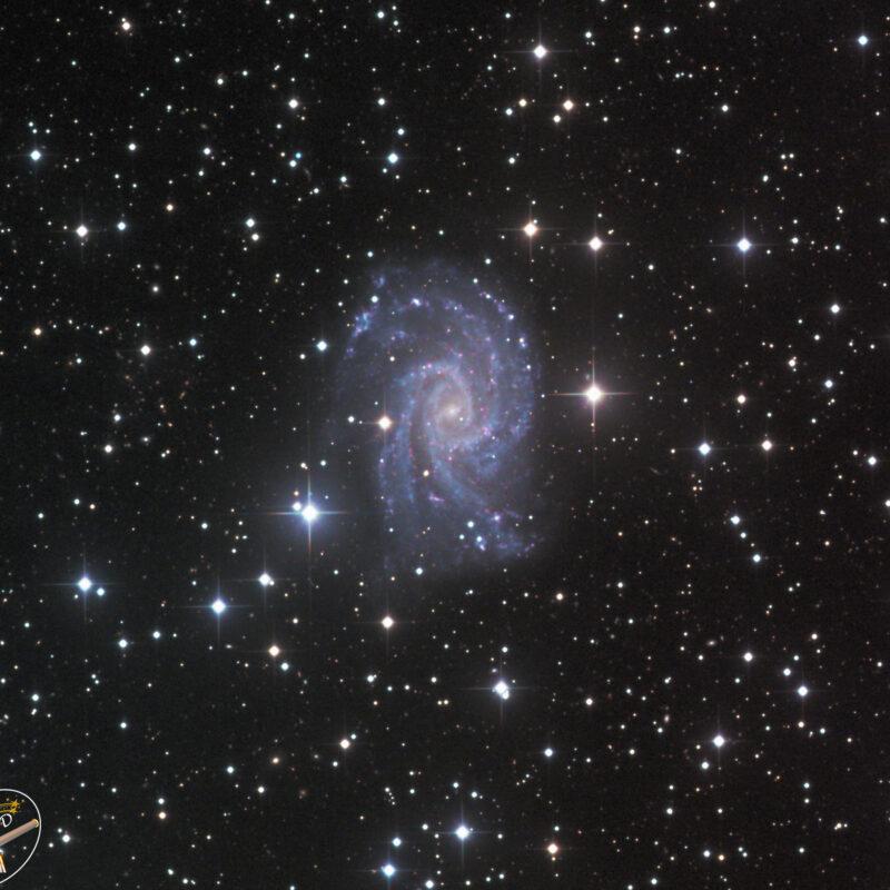 NGC 2835 Galaxisbearbeitet 800x800 - Galaxien der SH